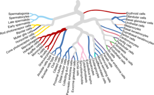 En celltypskarta över mänskliga vävnader